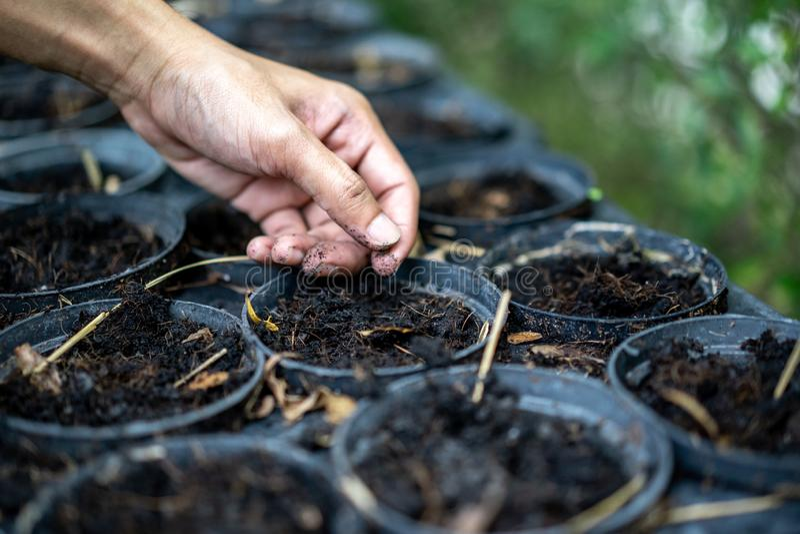 Vuxna människans hand är rymma och proping upp unga trädet i plast- blomkruka för blac royaltyfri foto
