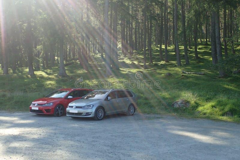 VW Golf MK7 gods i GT- & r-specifikation, med högväxta träd i bakgrund royaltyfri bild