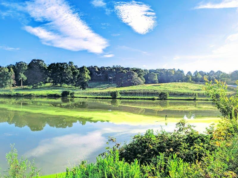Vy över långa avstånd för grönalger på en sjön royaltyfria bilder