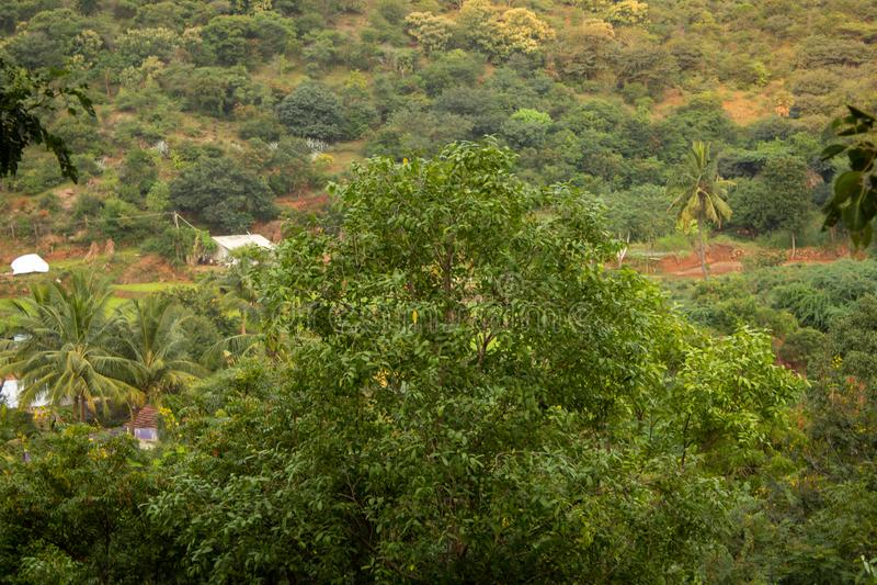 Vy över träd och småsamhällen nära en boskap, Salem, Tamil Nadu, Indien royaltyfri fotografi