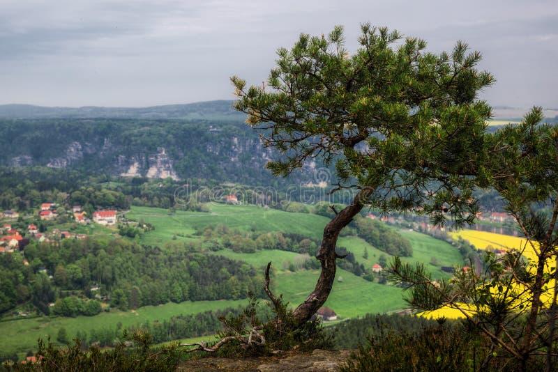 Vy från Lilienstein över floden Elbe arkivfoton