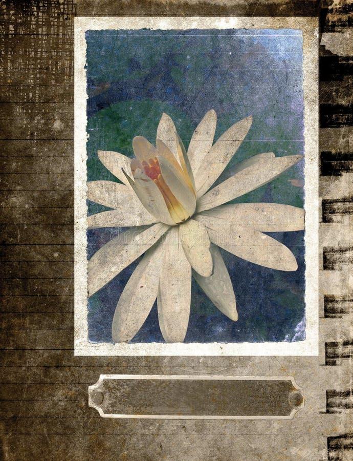 vykort för bakgrundsblommagrunge royaltyfri foto