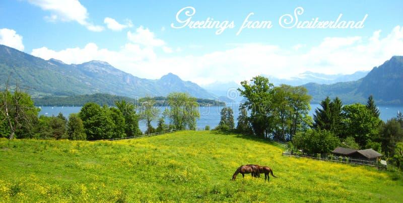 Vykort med en härlig sikt över den schweiziska sjön för turkos med snö-täckte berg, yachter, segelbåtar och två hästar arkivbilder