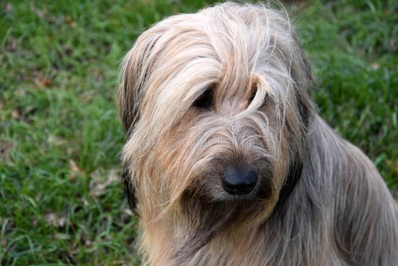 Wäller en ny avel av hundkapplöpning royaltyfri fotografi