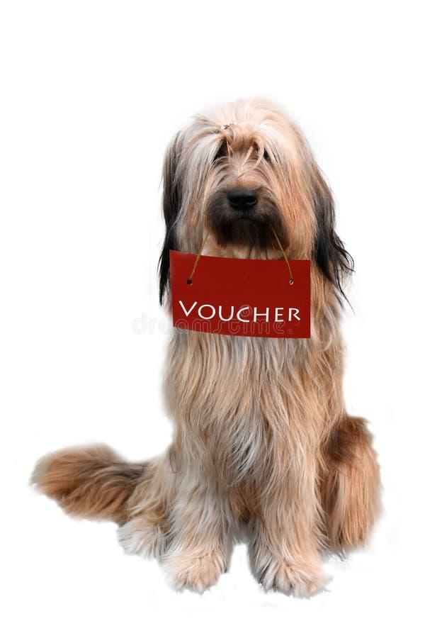 Wäller, une nouvelle race des chiens, tenant un bon de cadeau images stock