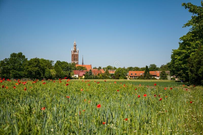 Wörlitz πίσω από cornfield με τις παπαρούνες στοκ εικόνα