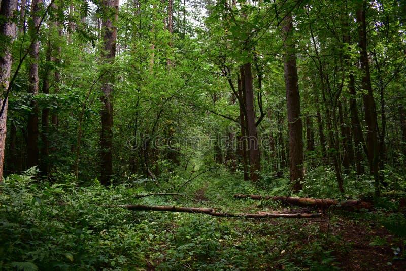 Wälder haben eine ursprüngliche Anziehungskraft, die Leute zurückkommen lässt und erhalten wenig näher an Natur lebendig, klug, m lizenzfreie stockbilder