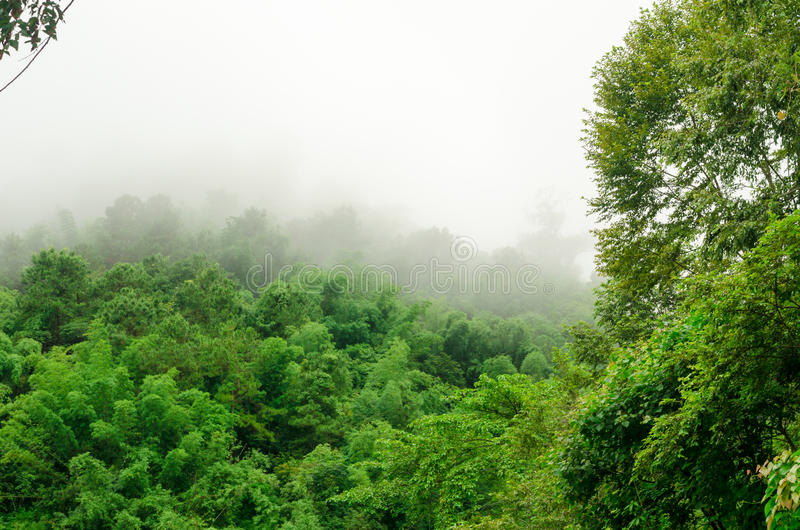 Wälder im Regenwald in Thailand stockfoto