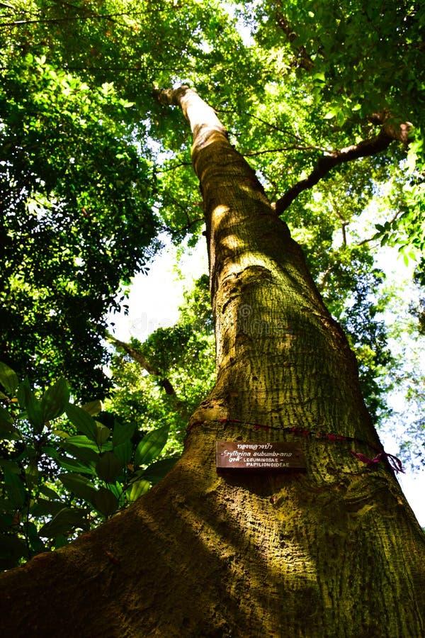 Wälder, Wasserfälle, Natur lizenzfreie stockbilder