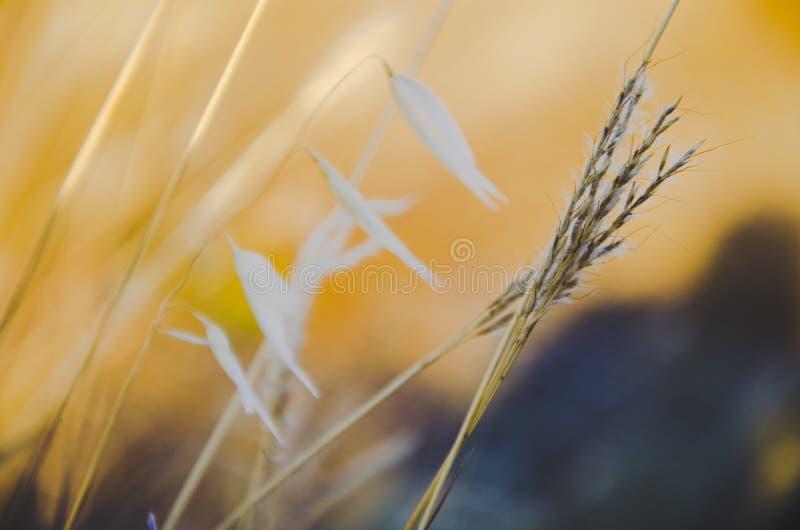 Wärmen Sie Feld lizenzfreies stockfoto