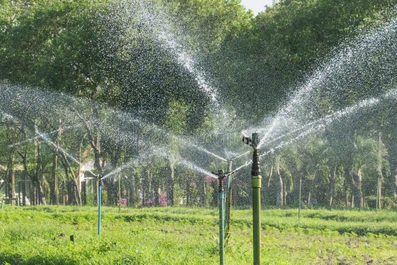 Wässern Sie den Springer, der in den Garten mit grünem Hintergrund gespritzt wird stockfotos