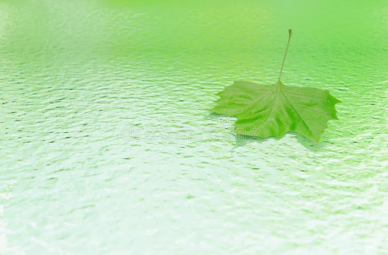 Wässern Sie mit grünem Blatt stockfotografie
