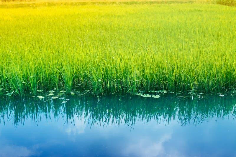 Wässern Sie Reflexion des Himmels, ländliches Westbengalen, Indien lizenzfreie stockbilder