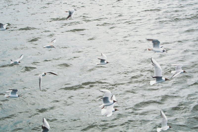 Wässern Sie Seehintergrund mit einer großen Gruppenmenge des Seemöwenfliegens stockfoto