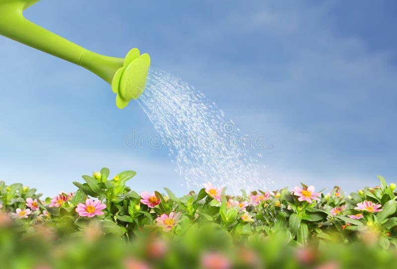 Wässern Sie strömende Gießkanne auf blühen die Blume stock abbildung