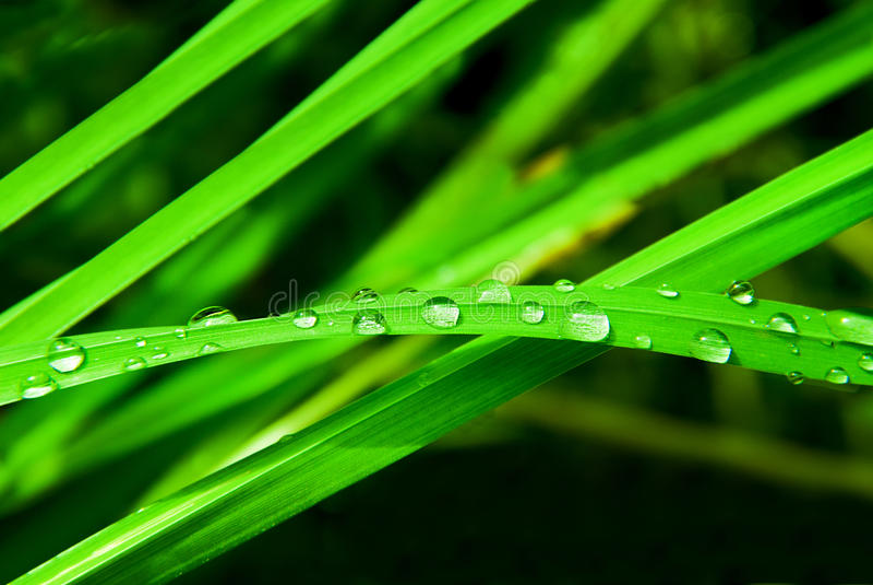 Wässern Sie Tropfen auf einem Blatt des Grases stockfotos