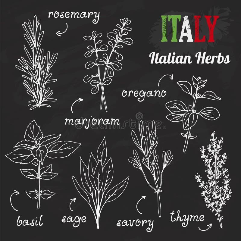 Włoscy ziele ustawiają, ręki rysujący ziele z imionami ilustracja wektor