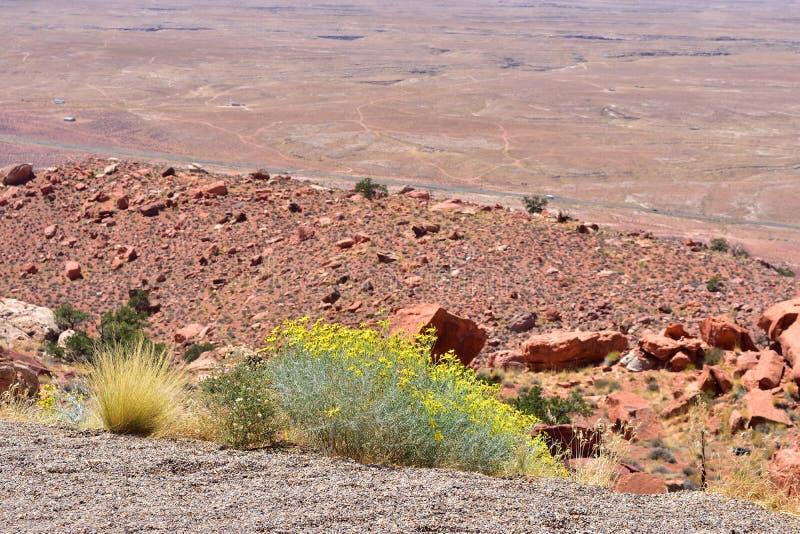 Wüste in Arizona lizenzfreies stockfoto