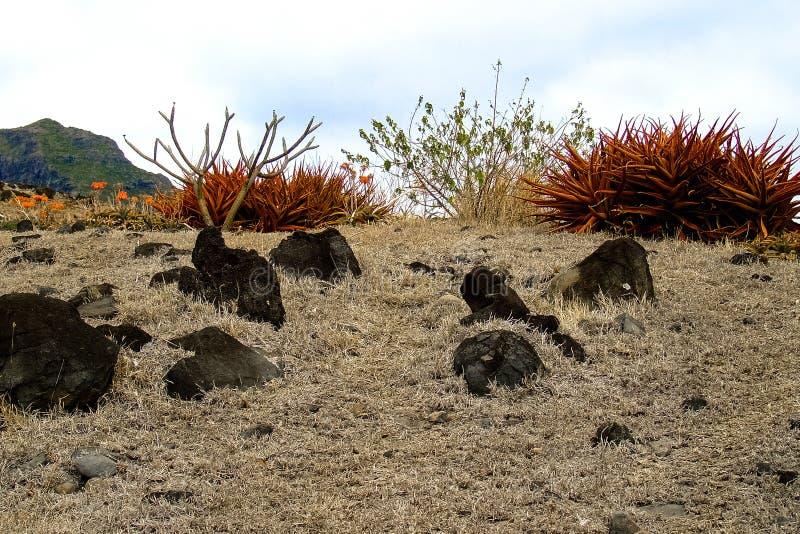 Wüste mit Felsen und Blumen stockfoto