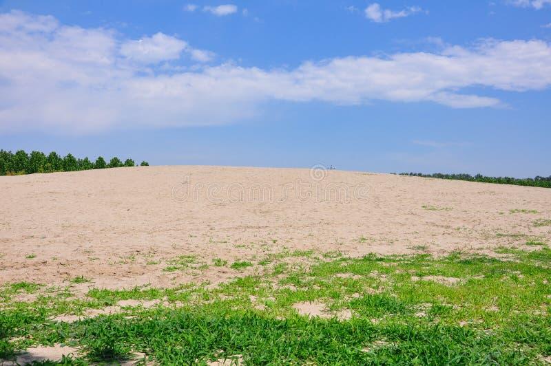 Wüste mit Gras, Baum lizenzfreie stockbilder