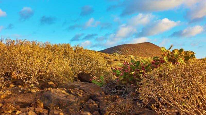 Wüste mit Pflanzen auf Teneriffa stockfotos