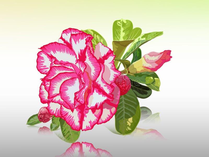 Wüste Rose vektor abbildung