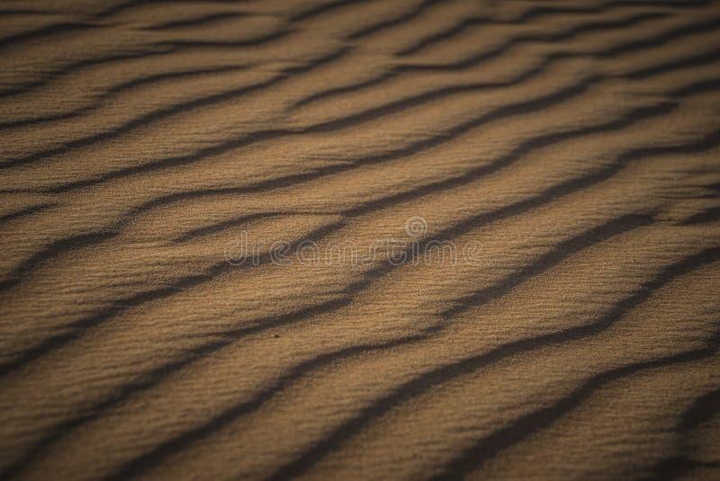 Wüste Safari Dubai lizenzfreies stockfoto