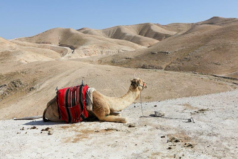 Wüste von Judea stockfoto