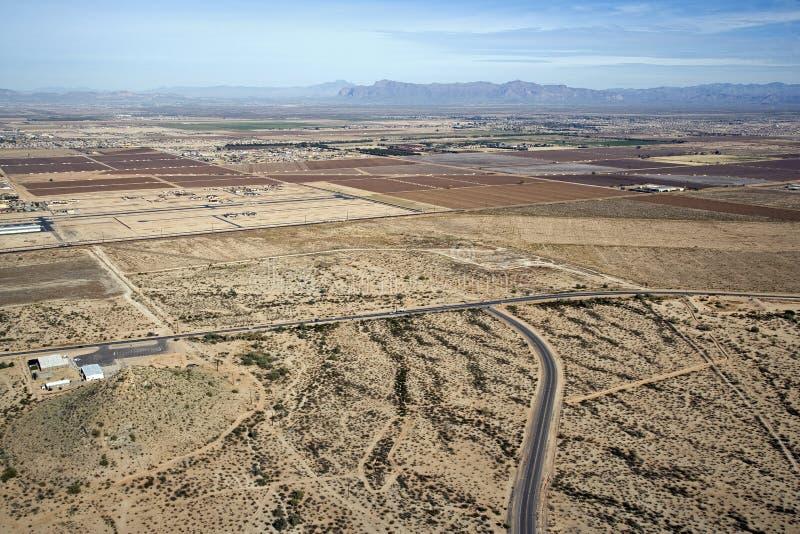 Wüsten-Baumwolle stockfotografie