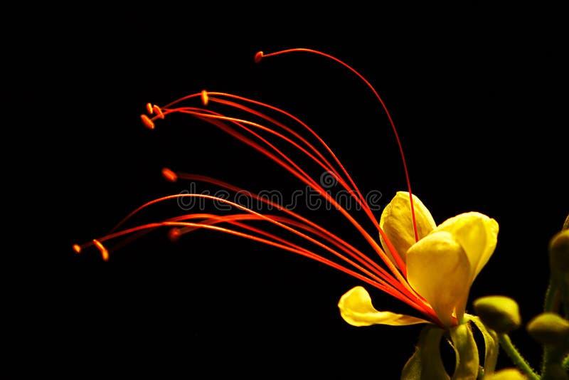 Wüsten-Blume lizenzfreie stockbilder