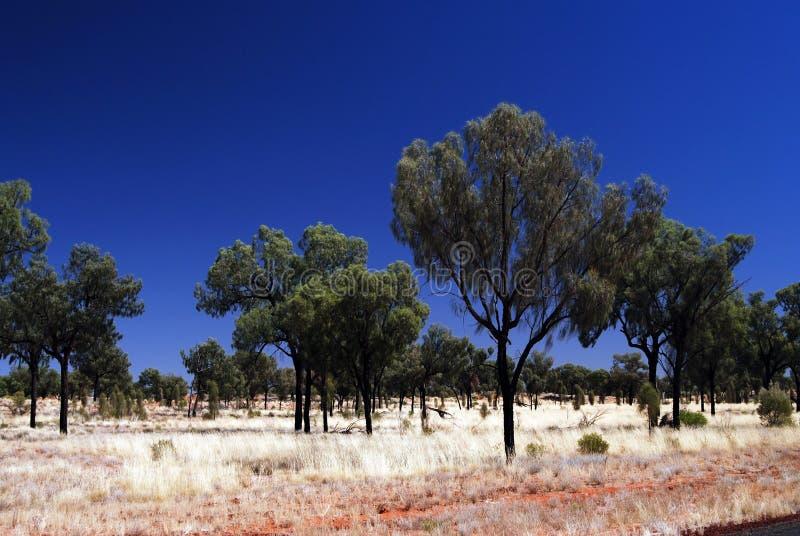 Wüsten-Eichen-Bäume auf spinifex Ebene stockfotografie