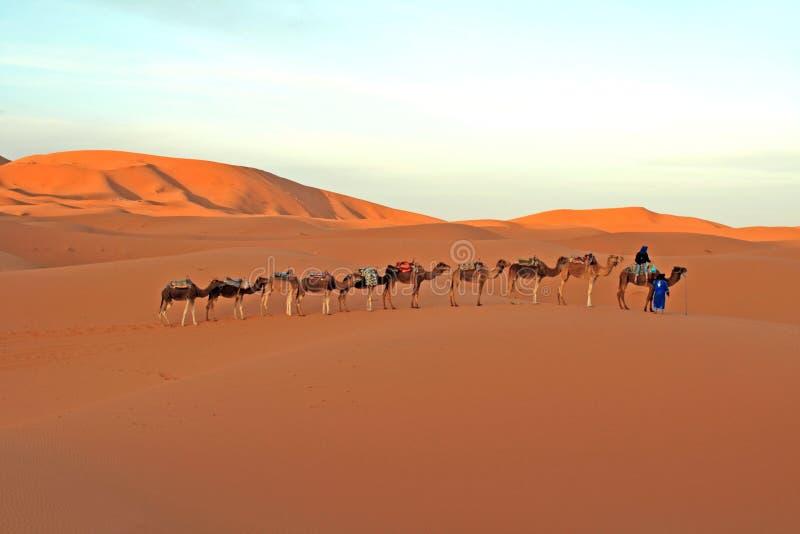 Wüsten-Kamel-Fahrt stockfoto