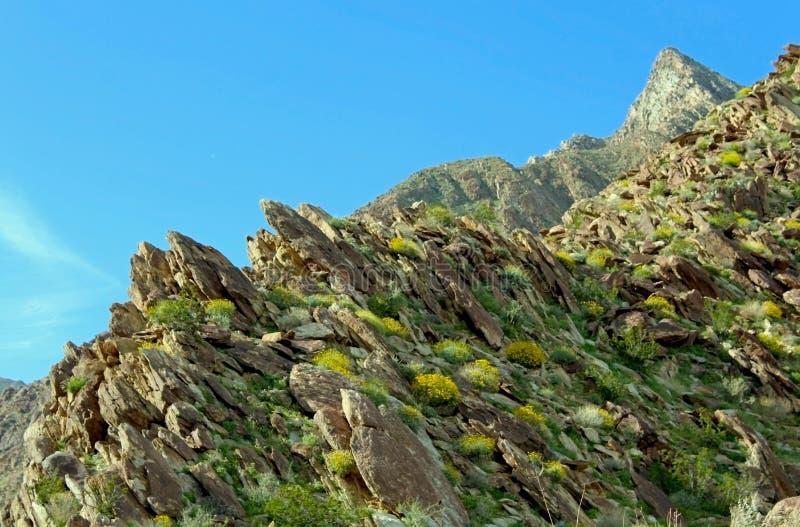 Wüsten-Nationalpark Anza Borrego, Frühlingslandschaft mit dem Superblühen lizenzfreies stockfoto
