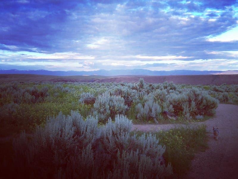 Wüsten-Salbei lizenzfreies stockfoto