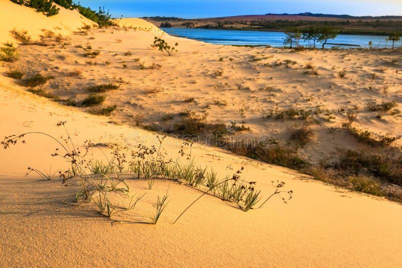 Wüsten-Szene mit Sanddünen, See, Anlagen und Sand-Mustern lizenzfreies stockfoto
