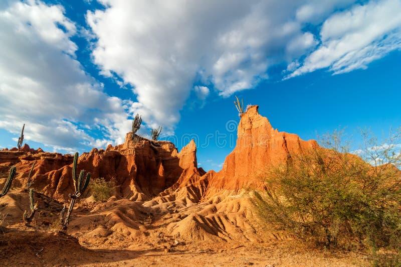 Wüsten-Tal und Kaktus lizenzfreies stockbild