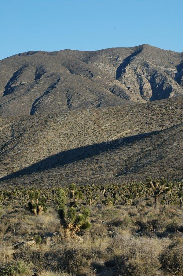 Wüsten-tiefer Kontrast stockfoto