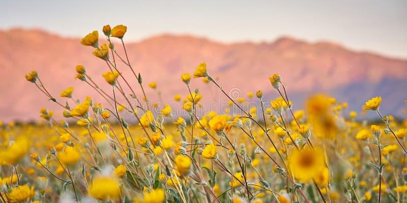 Wüstenblumen lizenzfreie stockfotografie