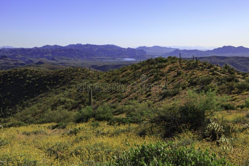 Wüstenlandschaft mit Saguaro Cacti lizenzfreie stockfotos