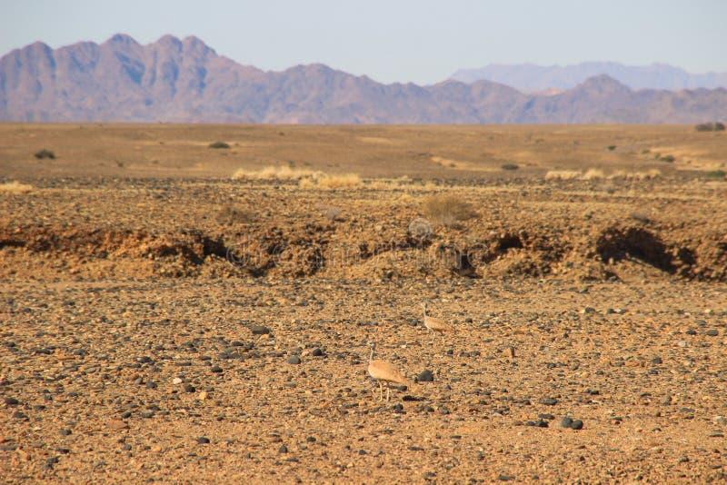 Wüstenlandschaften mit Bergen im Süden von Namibia und von zwei diskreten gelben Vögeln Die Trockenzeit lizenzfreies stockfoto