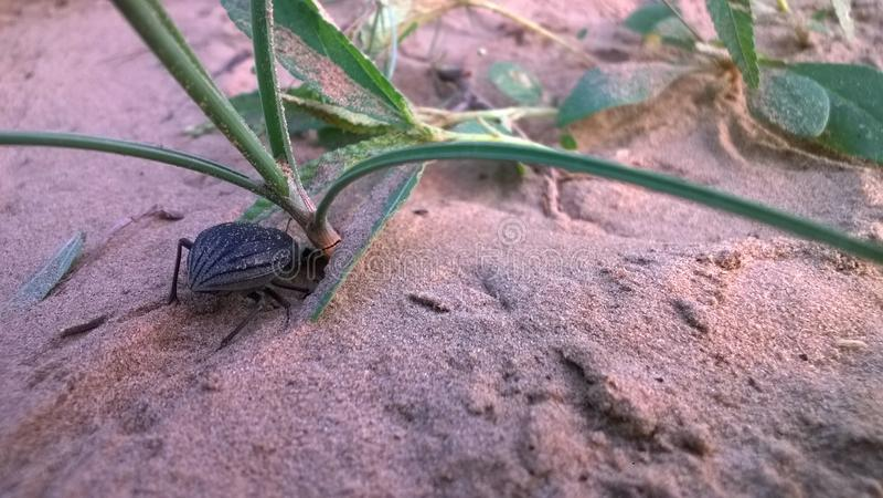 Wüstenmonster im Sand lizenzfreies stockfoto