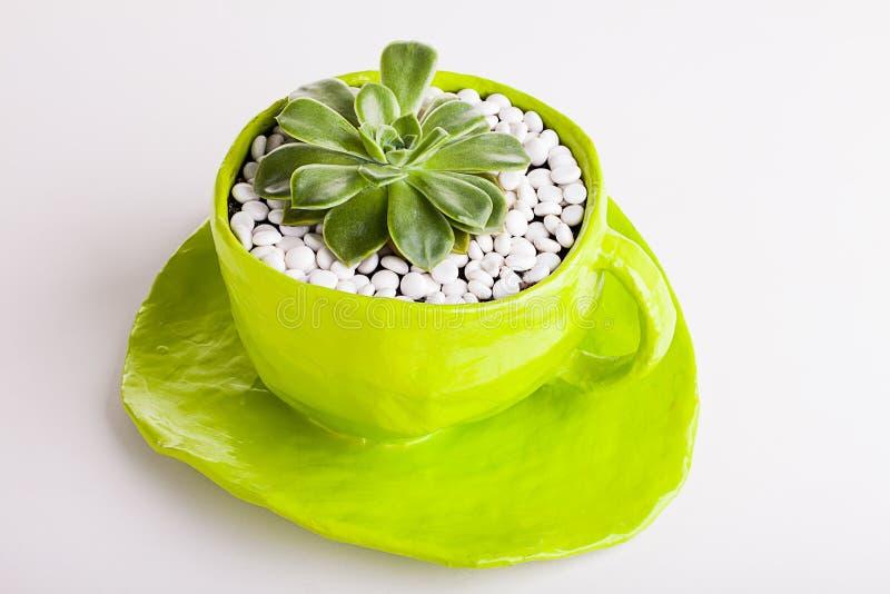 Wüstenrose gepflanzt in einer grünen Schale stockfotos