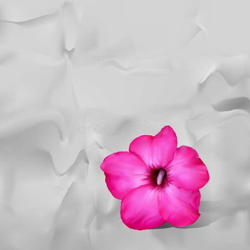 Wüstenroseblume mit Schatten auf Weißbuchhintergrund vektor abbildung