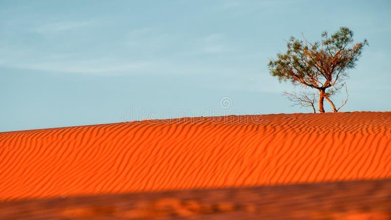 WüstenSanddüne stockbilder