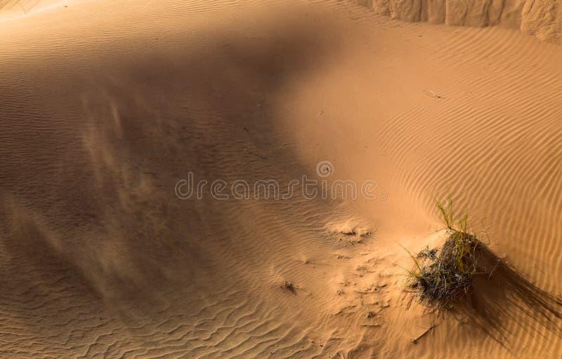 Wüstensonnenuntergangbelichtung nahe Dubai, Vereinigte Arabische Emirate stockbilder