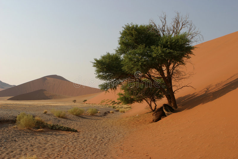 Wüstenvegetation lizenzfreies stockbild
