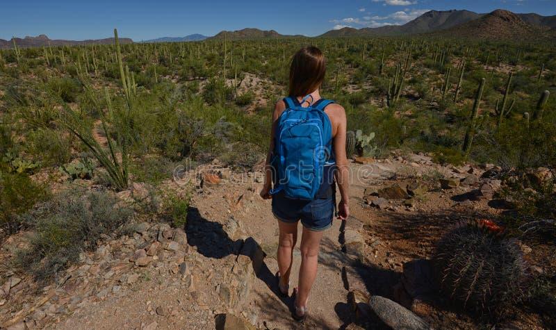 Wüstenwanderung mit Kakteen und Bergen lizenzfreie stockfotografie