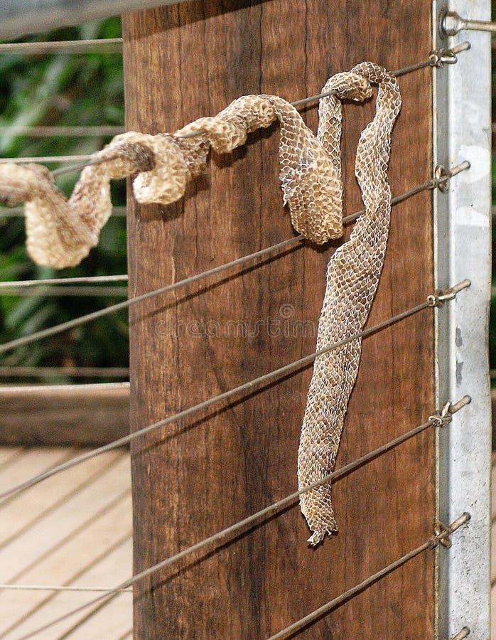 Wąż skóra na Drucianym ogrodzeniu obraz royalty free