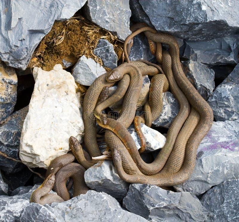 wąż woda północna woda obrazy stock
