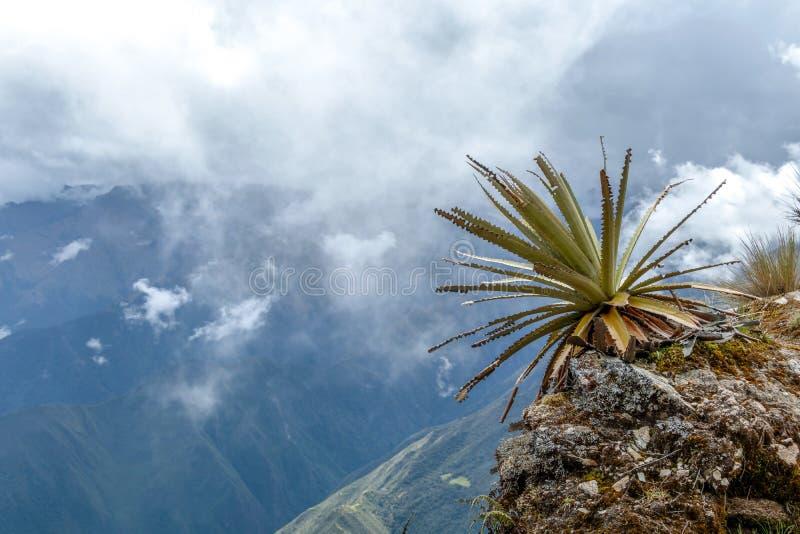 Wąska ścieżka na wycieczkuje śladzie przy dużych wysokości Peruwiańskimi górami między Maizal i Yanama, Peru fotografia royalty free